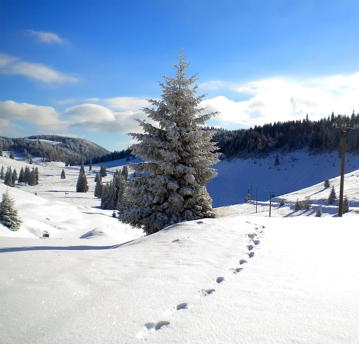 Iarna in Padis