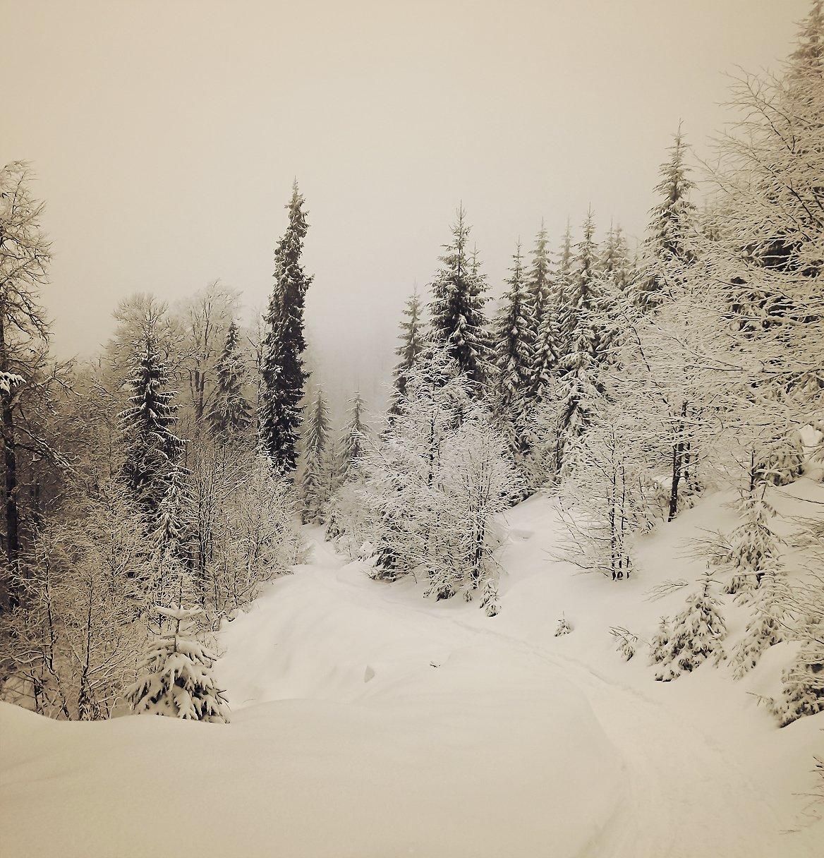 O iarna frumoasa