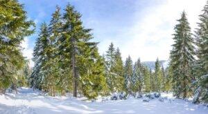Peisaj pitoresc de iarna