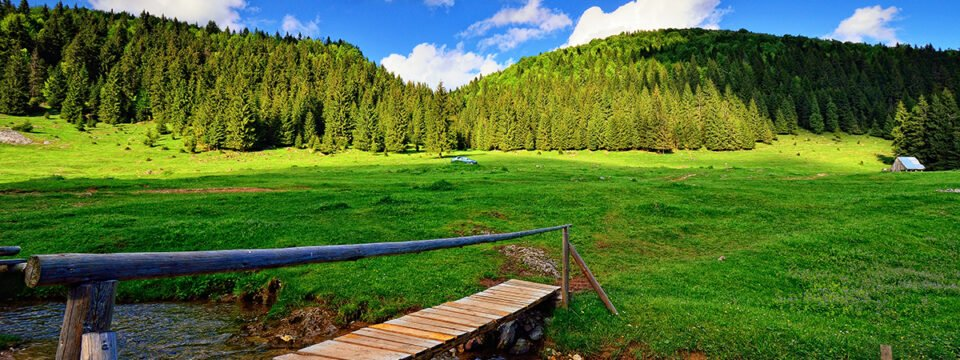 Trail: Padiș cottage – Căput glade
