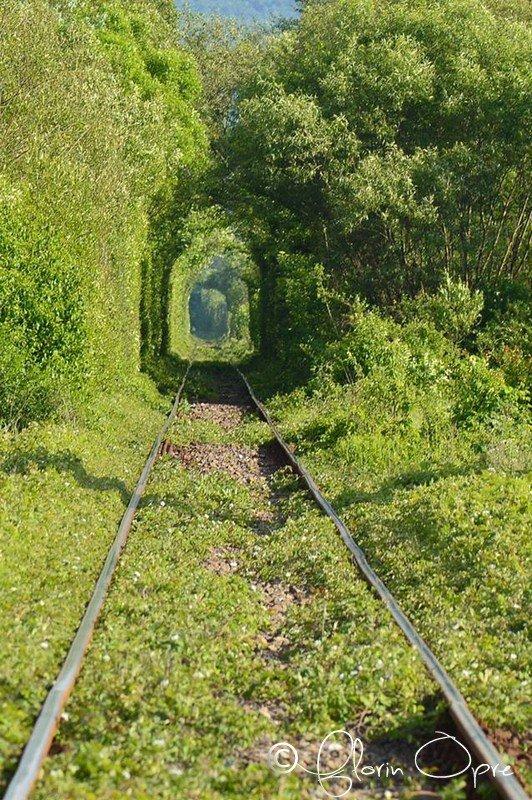 Tunelul verde