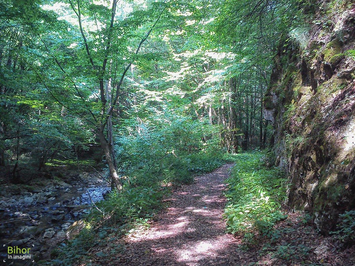 Valea Mișidului