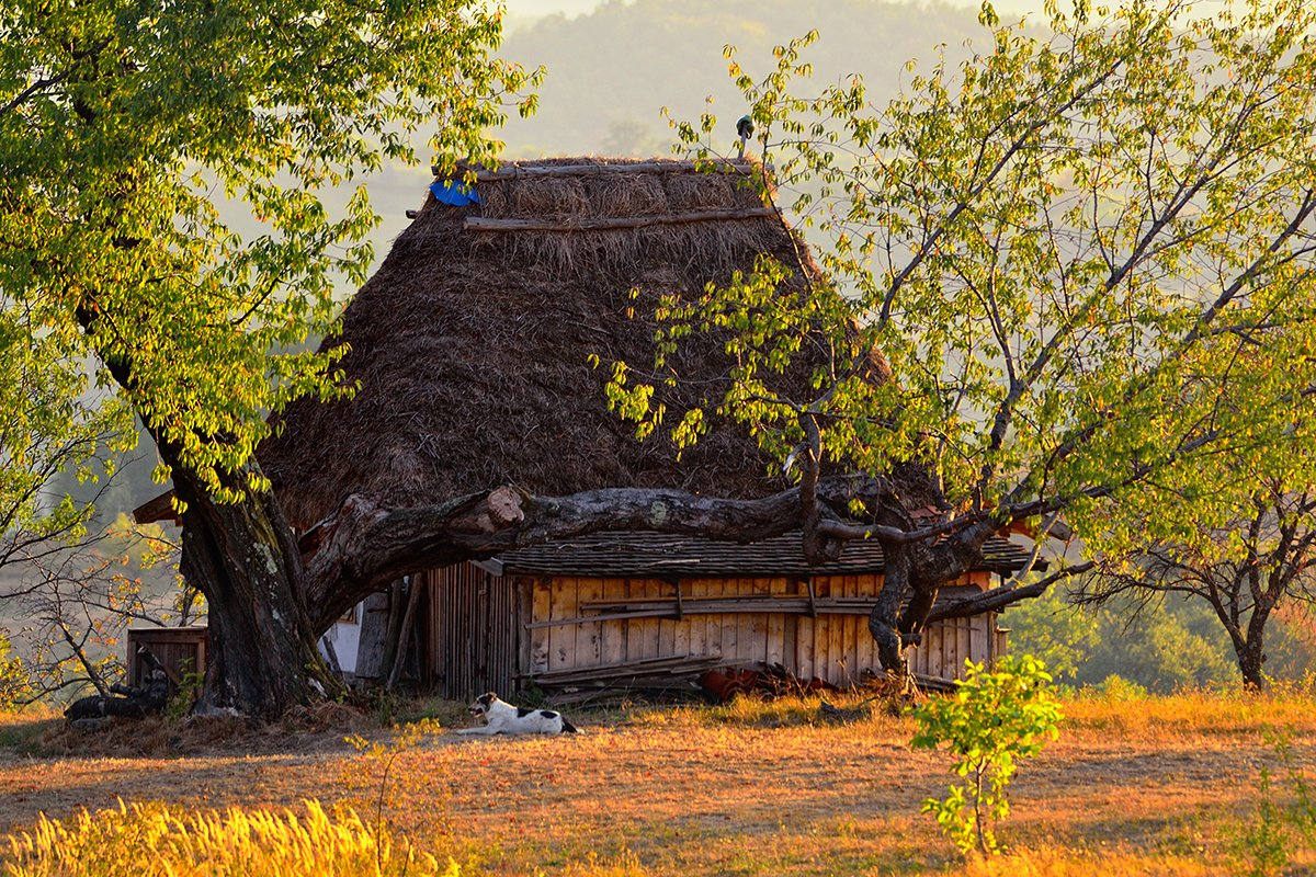 Imagini pentru imagini cu case taranesti