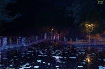 Lacul cu nuferi din Baile Felix
