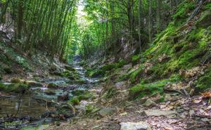 Valea Boiului1