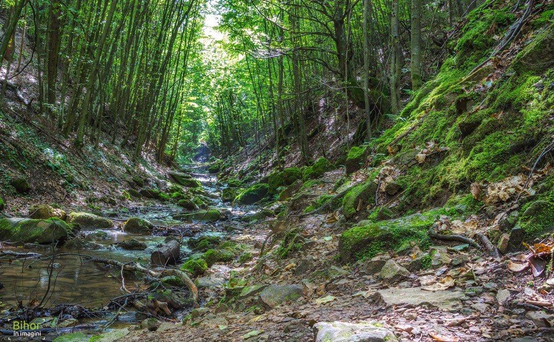 Valea și Cascada Boiului