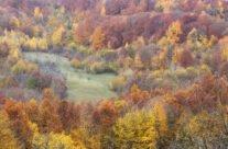 Culori de toamnă în Muntele Șes