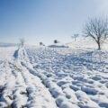 O dimineata de iarna in Vârciorog