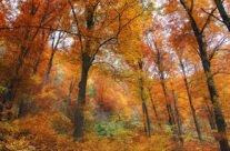 Peisaj pitoresc de toamnă în Șuncuiuș