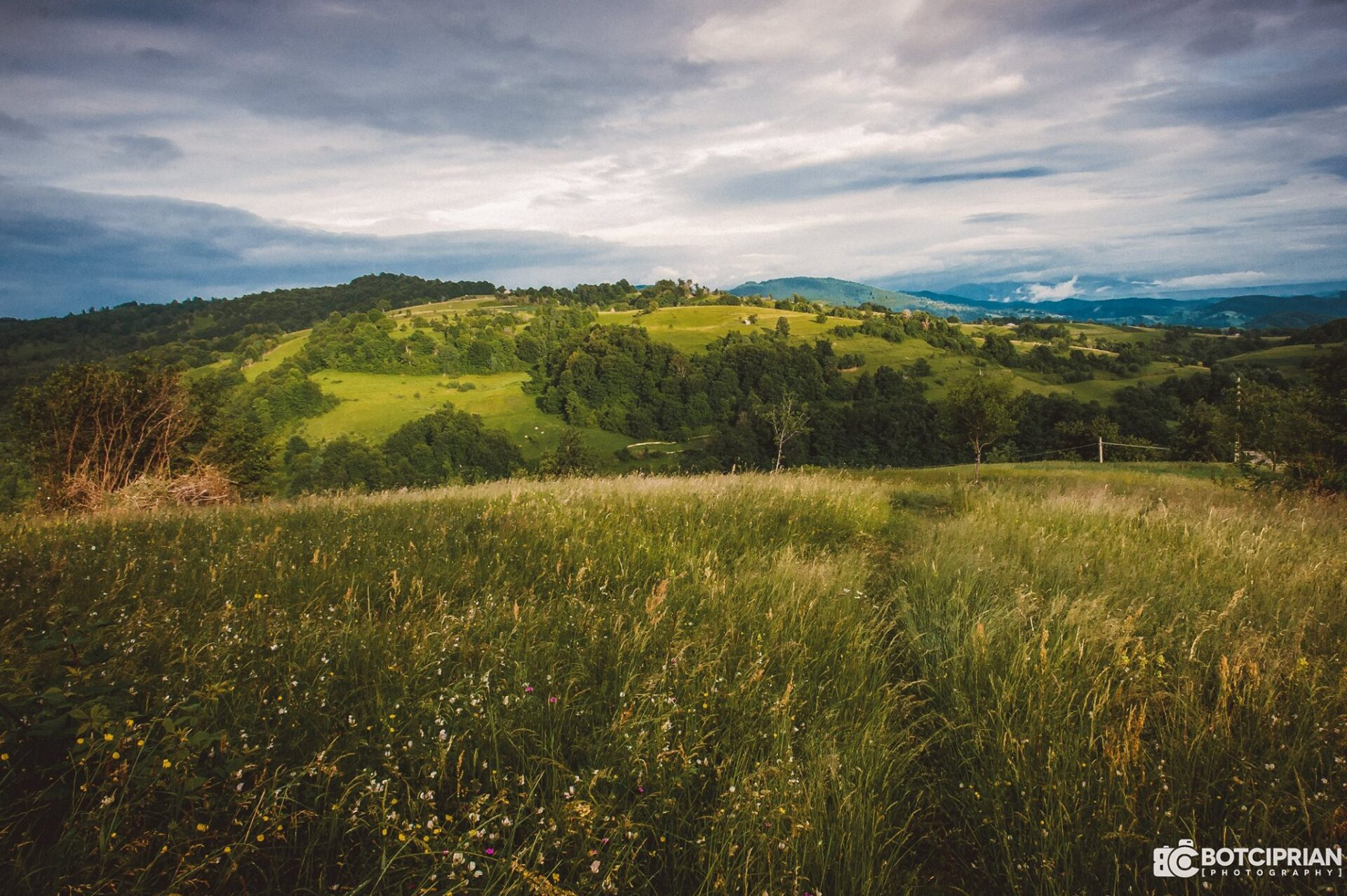 Roșia de Beiuș village