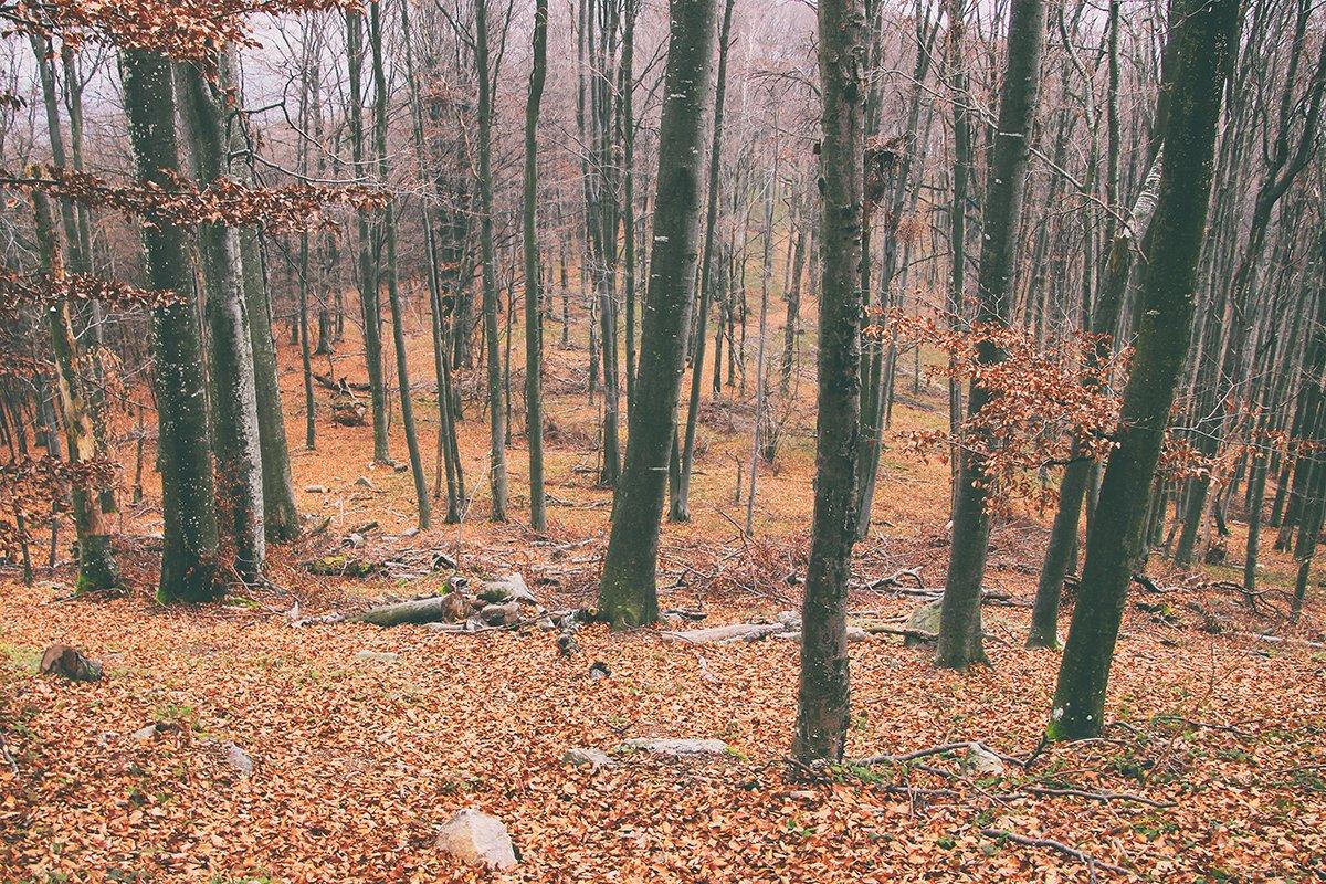Toamna prin Munții Pădurea Craiului