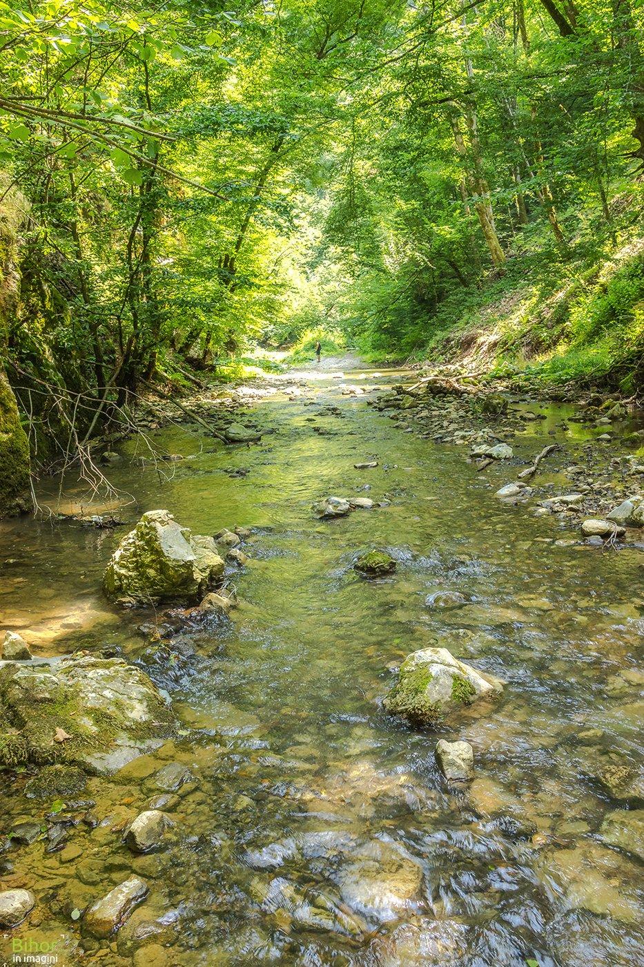 Valea Videi