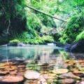 Cheile Galbenei Parcul Natural Apuseni