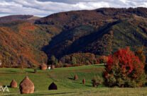 Vedere din satul Damiș