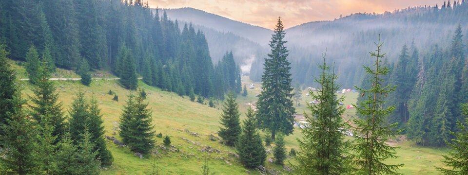 Trail: Padiș cottage – Lumea Pierdută (The Lost world)