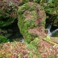 Pod natural pe Cheile Jgheabului