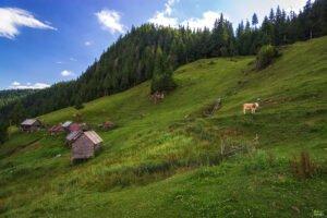 Valea Gârdişoara