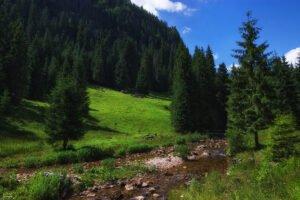 Valea Gârdişoara02
