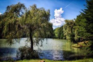 Lacul Vida03