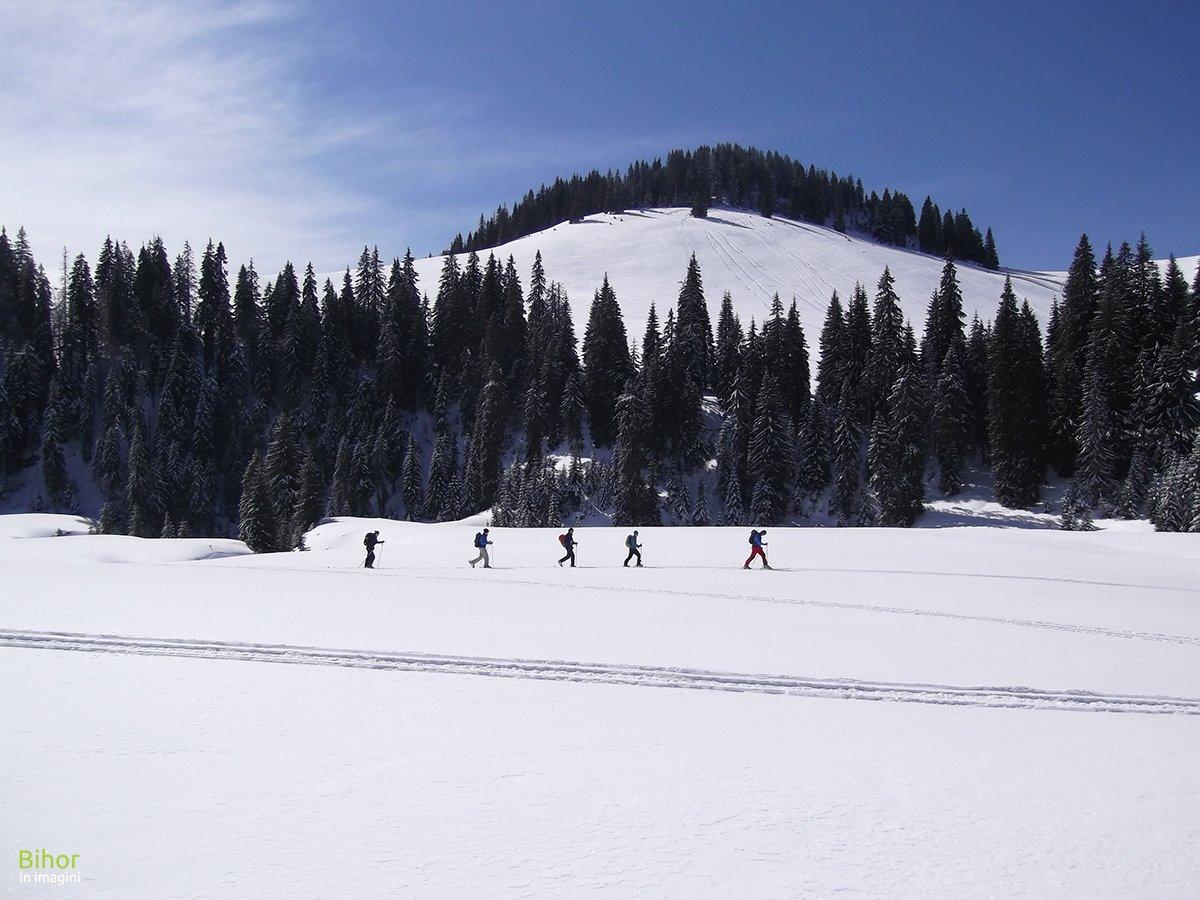 Winter in Vărăşoaia Glade