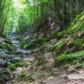 Valea Boiului