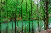 Lacul Vida printre copaci