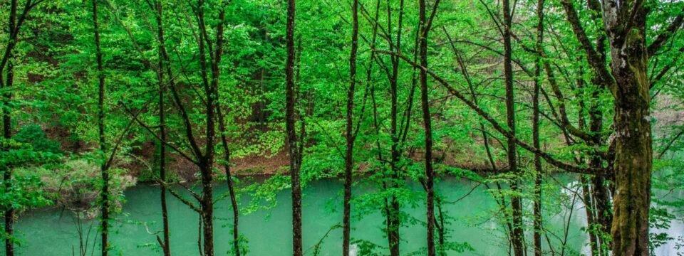 Vida Lake through the trees