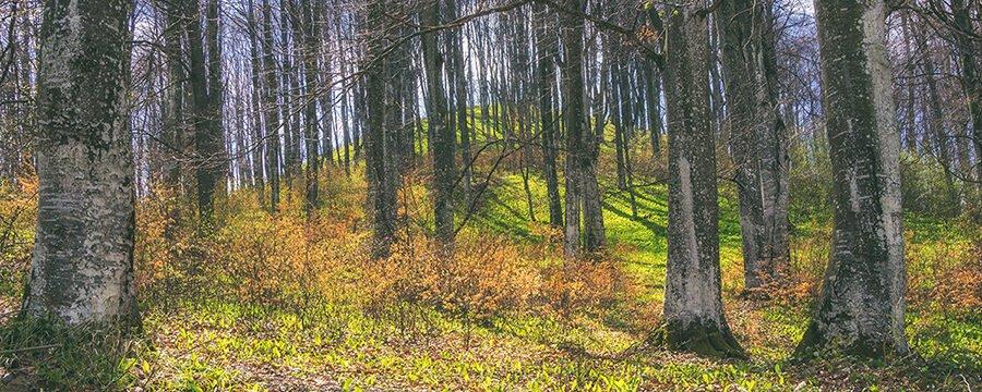 Pădurea prinde viața