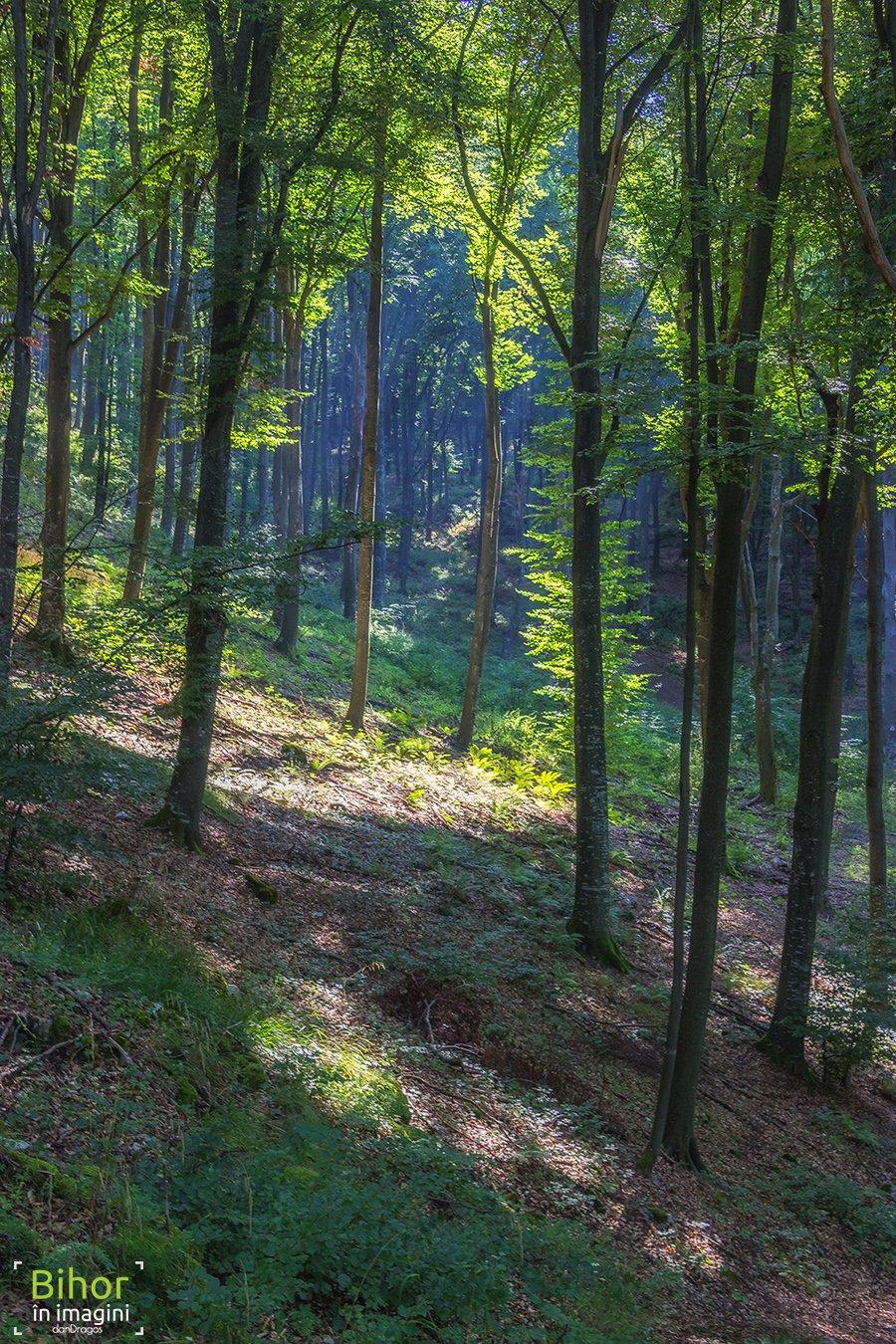 Primăvara prin pădure