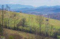 Vedere spre Munții Bihor