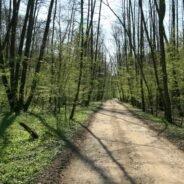 Traseu turistic pe bicicletă Munții Plopiș