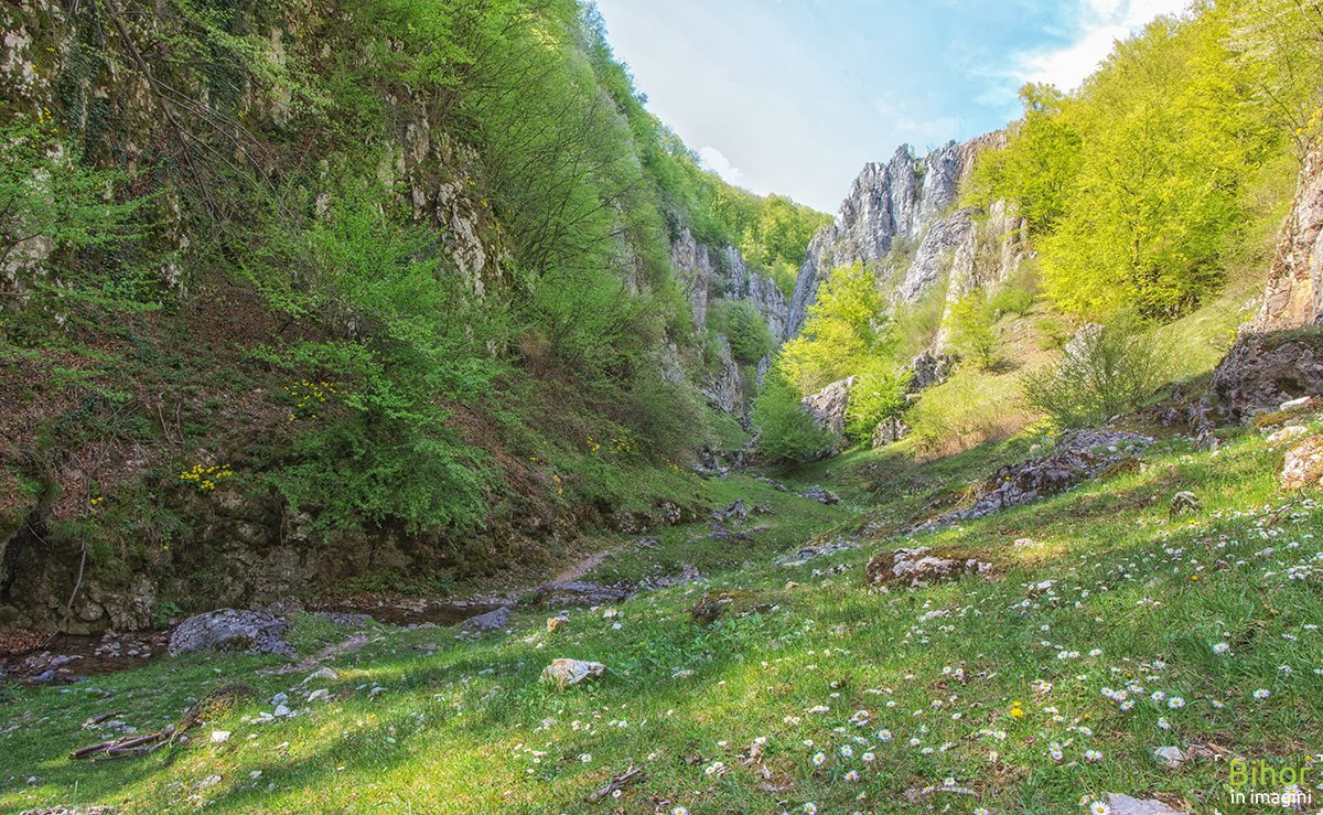 Cheile Cuților din Muntii Padurea Craiului