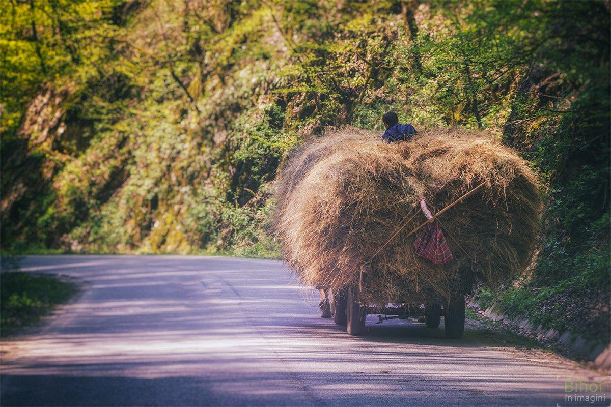 Cu căruța pe Cheile Albioarei