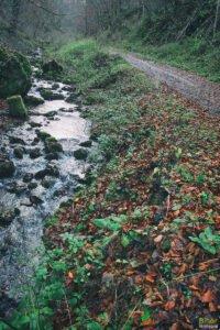 Valea Leşului