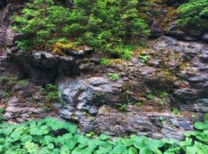 Perete de stanca cu vegetatie