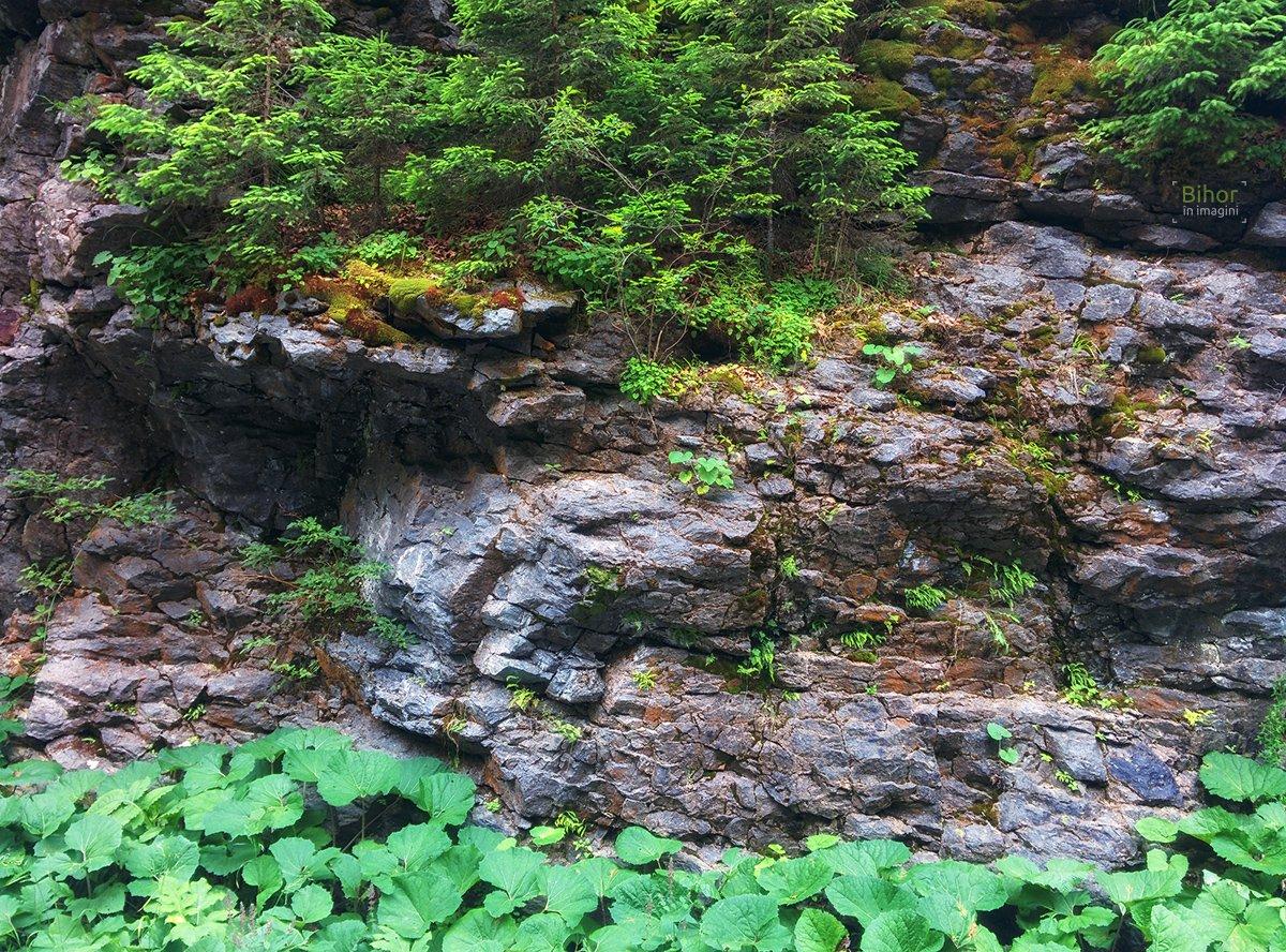 Perete de stânca cu vegetație