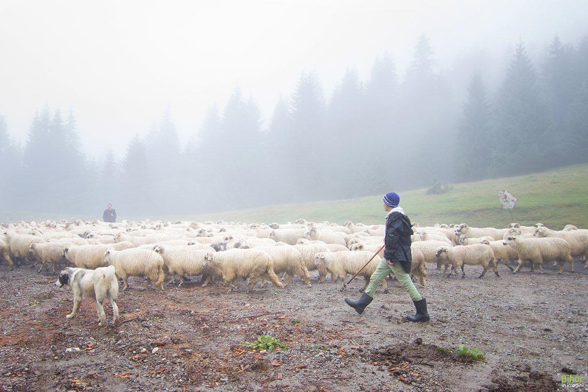 Ciobanii şi oile lor