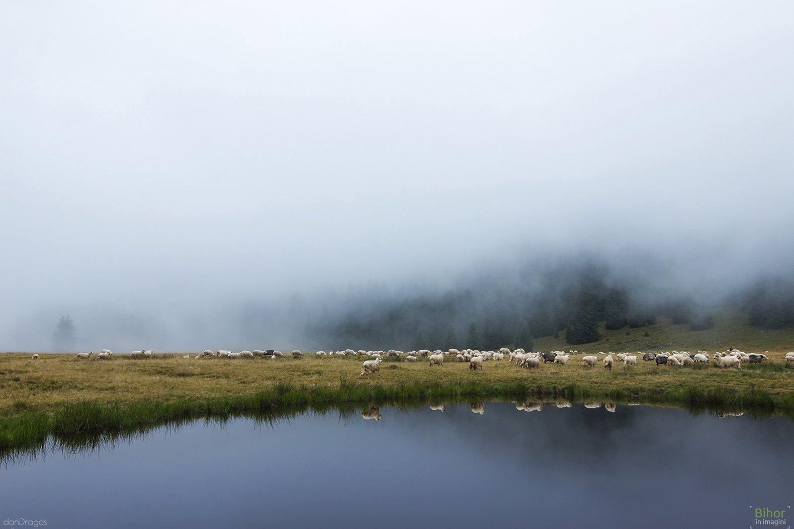 Poiana Vărășoaia în ceață