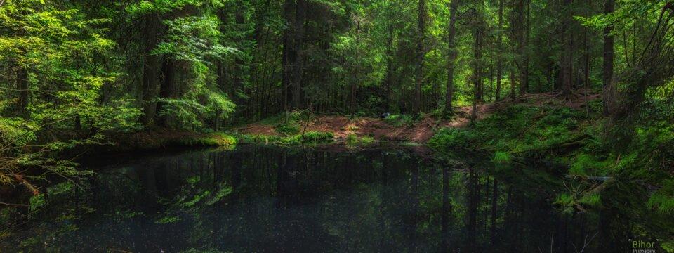 Tăul Negru, lacul din mijlocul pădurii de conifere