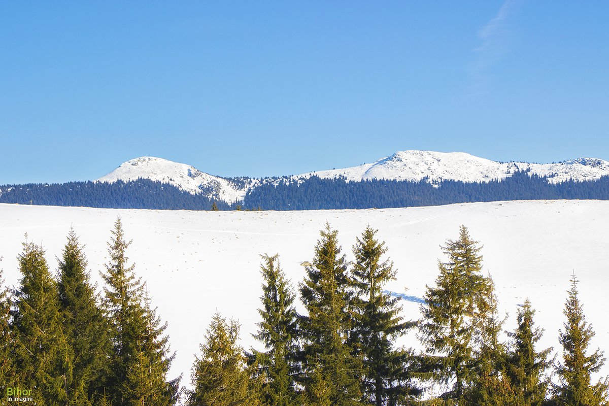 Winter scenery in Vlădeasa Mountains
