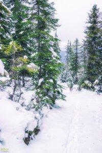 Iarna pe traseu prin Stâna de Vale