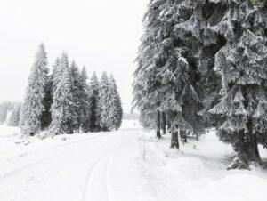 Iarna spre platoul padis