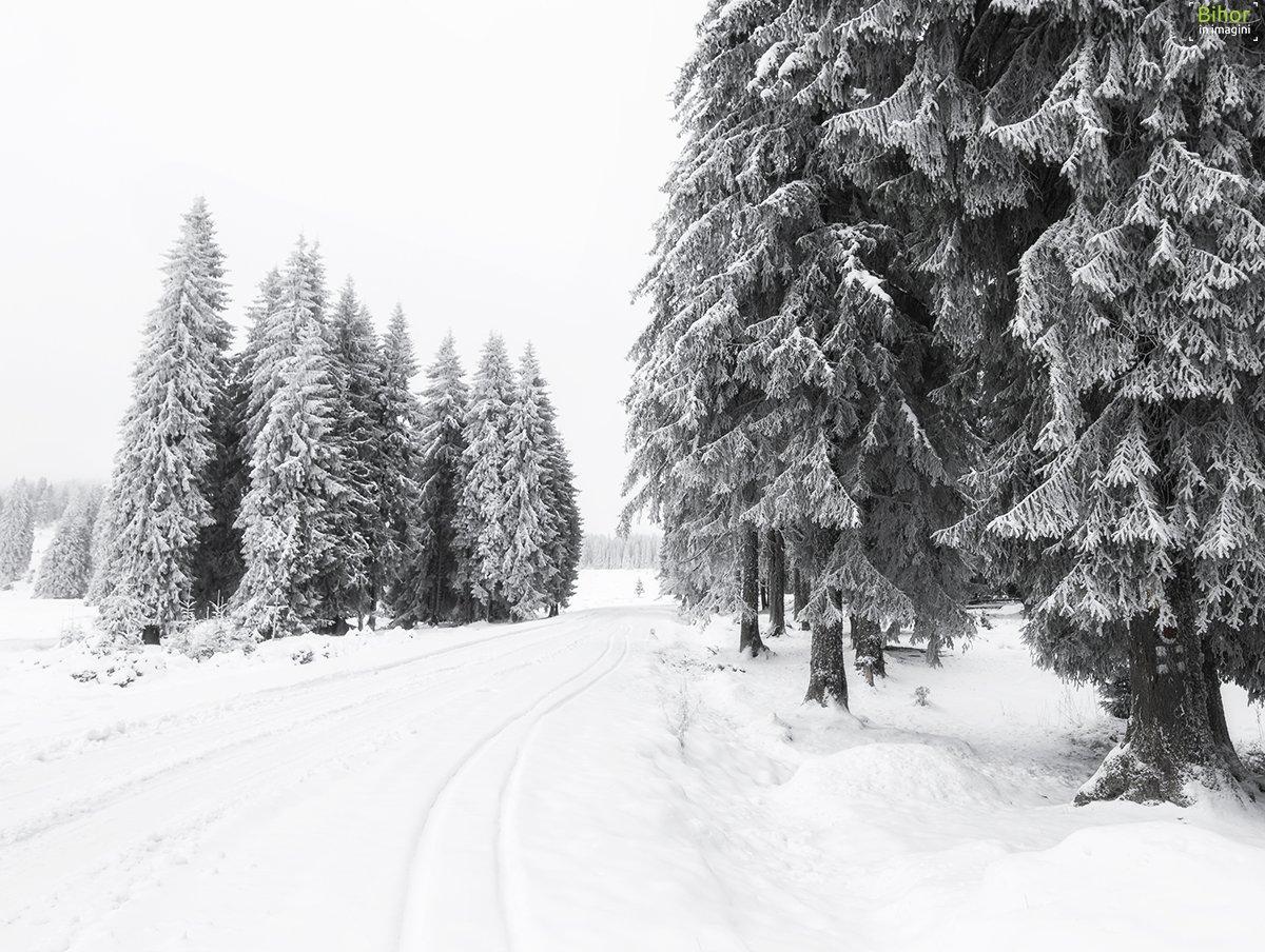 Iarna spre platoul Padiș