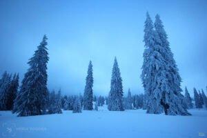 Poiana Varasoaia iarna