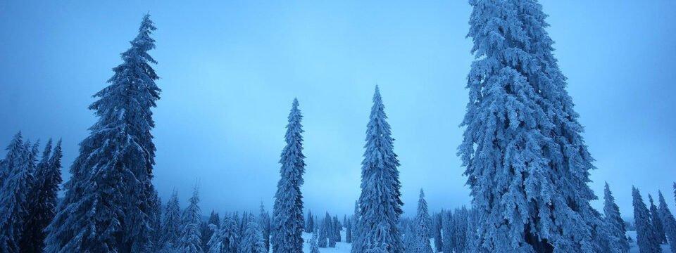 Winter scenery in Vărășoaia glade