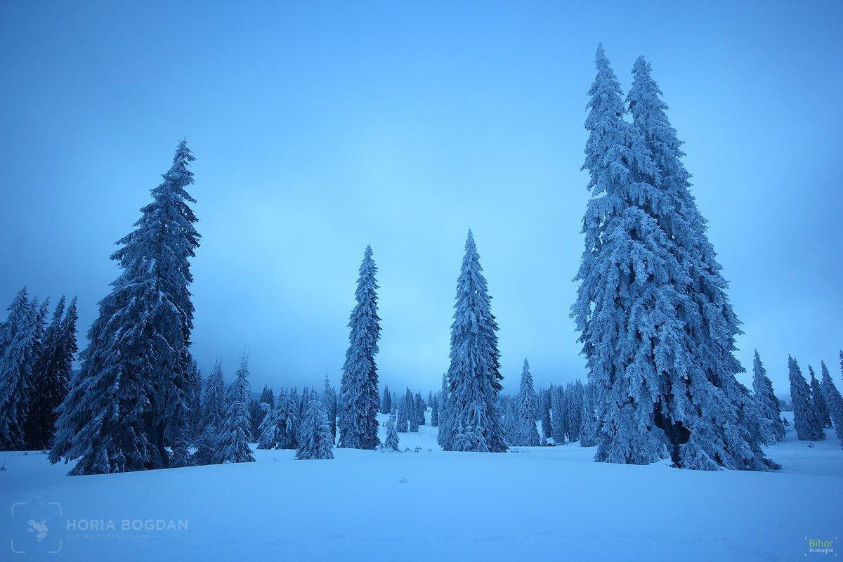 Poiana Vărășoaia iarna