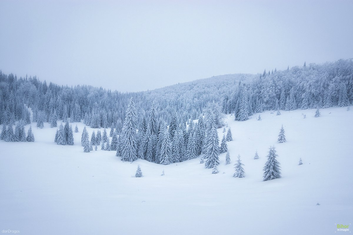 Iarna prin Padiș
