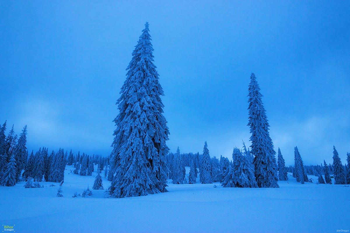 Could winter night in Vărășoaia glade