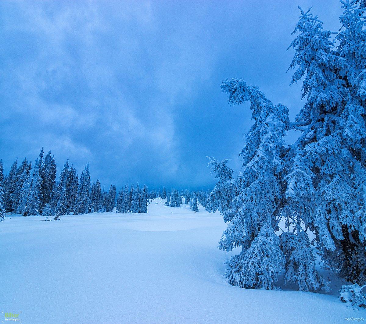 Winter landscape in Vărășoaia glade