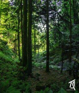 Traseul Poiana–Cascada SfTreime-Băiţa01